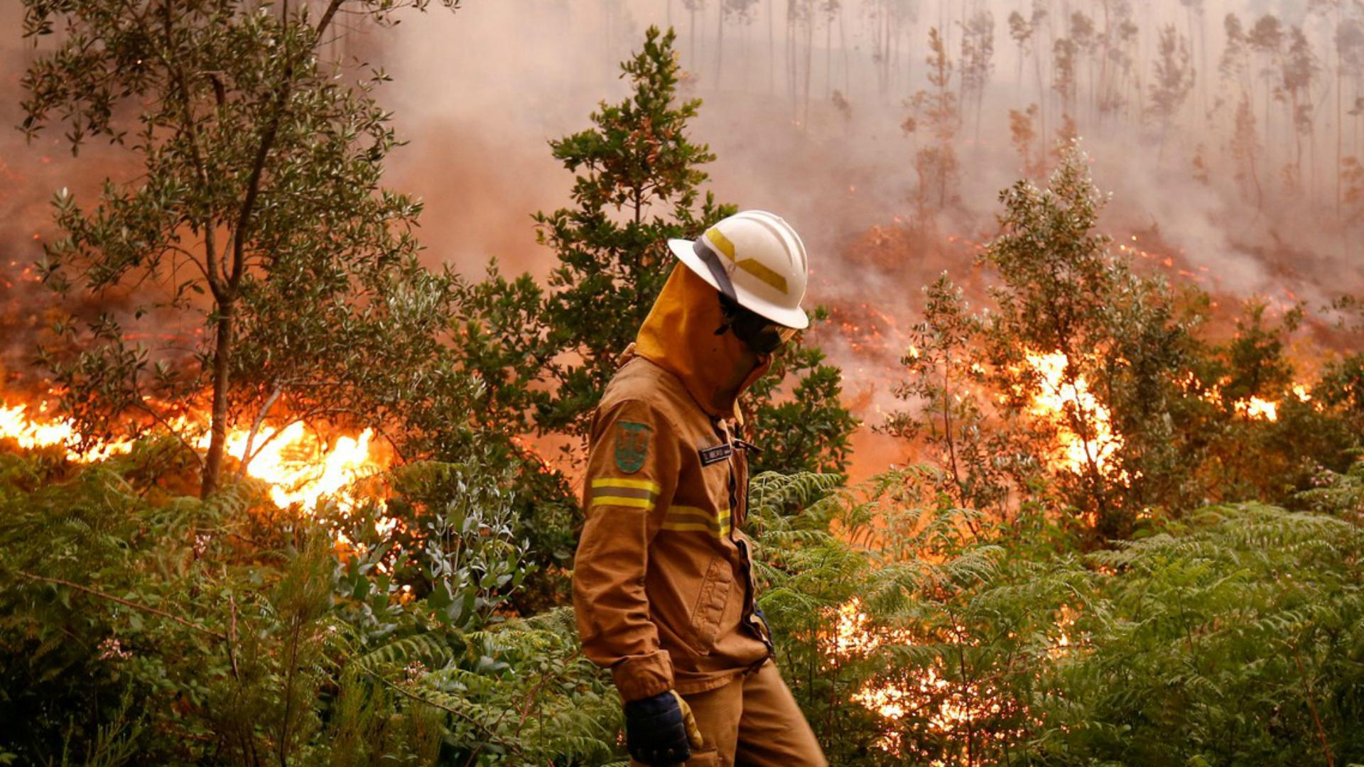Terror em Portugal: 60 pessoas morrem queimadas vivas durante tragédia