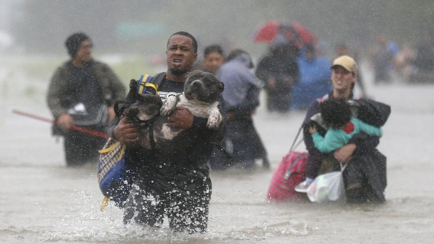 People risk their lives to save animals in the wake of Hurricane Harvey