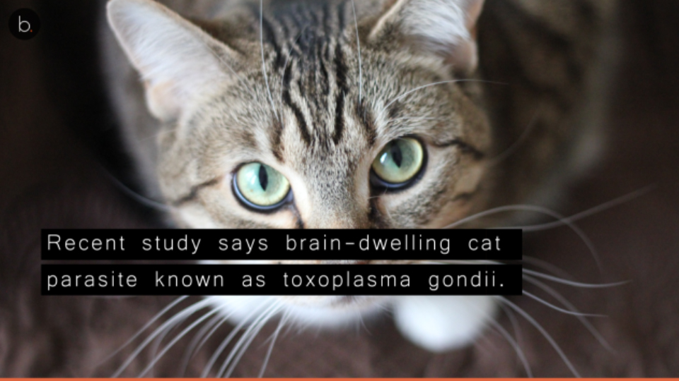 Beware of cats! Experts find link between cat parasites, neurological disorders.
