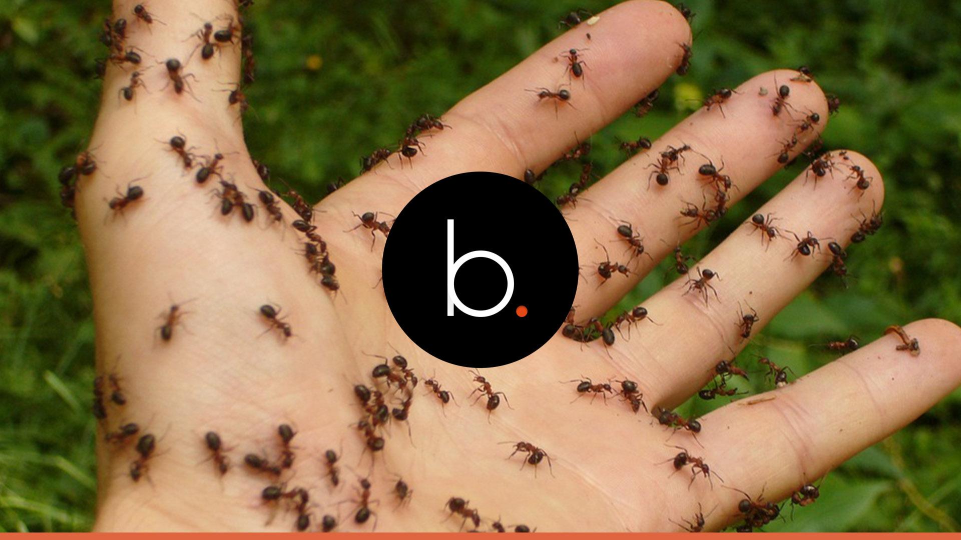Assista: Bebê é encontrado no lixo com hematomas e cheio de formigas