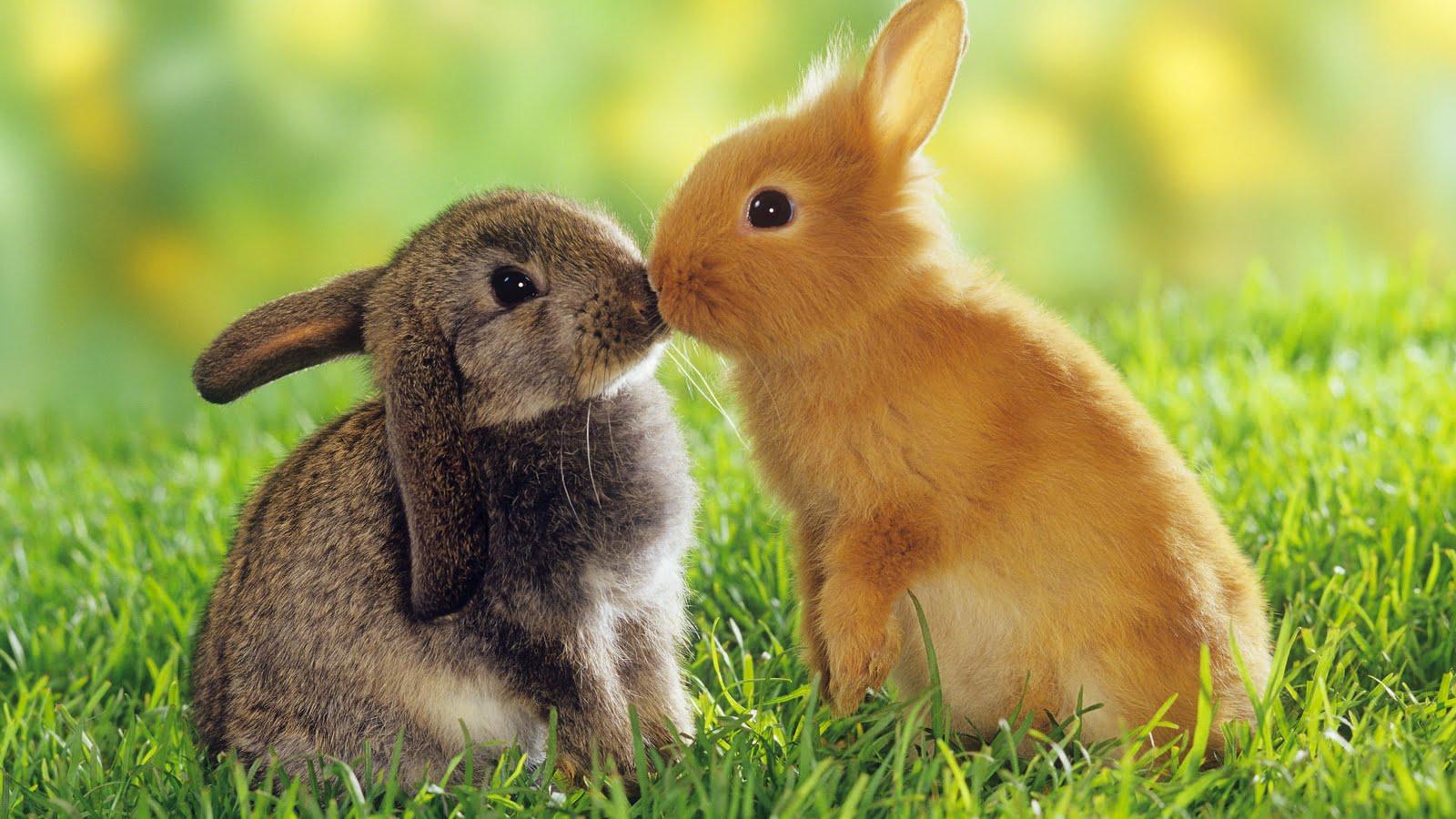 Animales: Los verdaderos humanos en la tierra, nosotros los verdaderos animales
