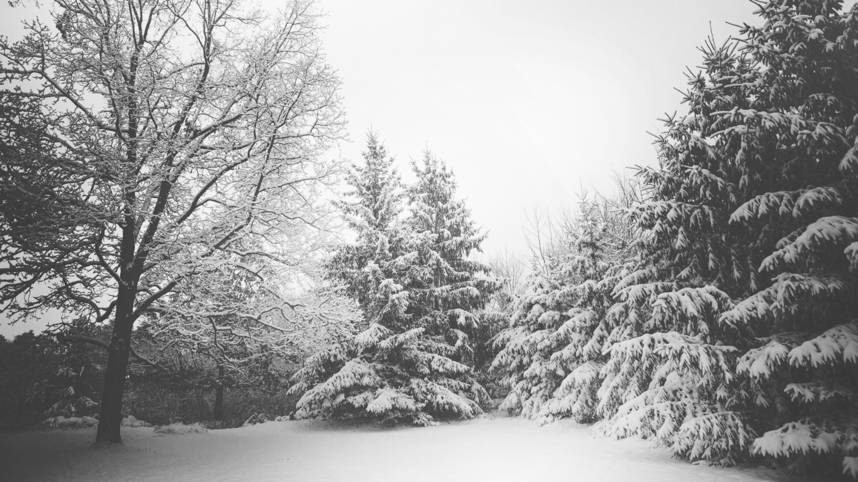 Combating cabin fever with fun winter activities