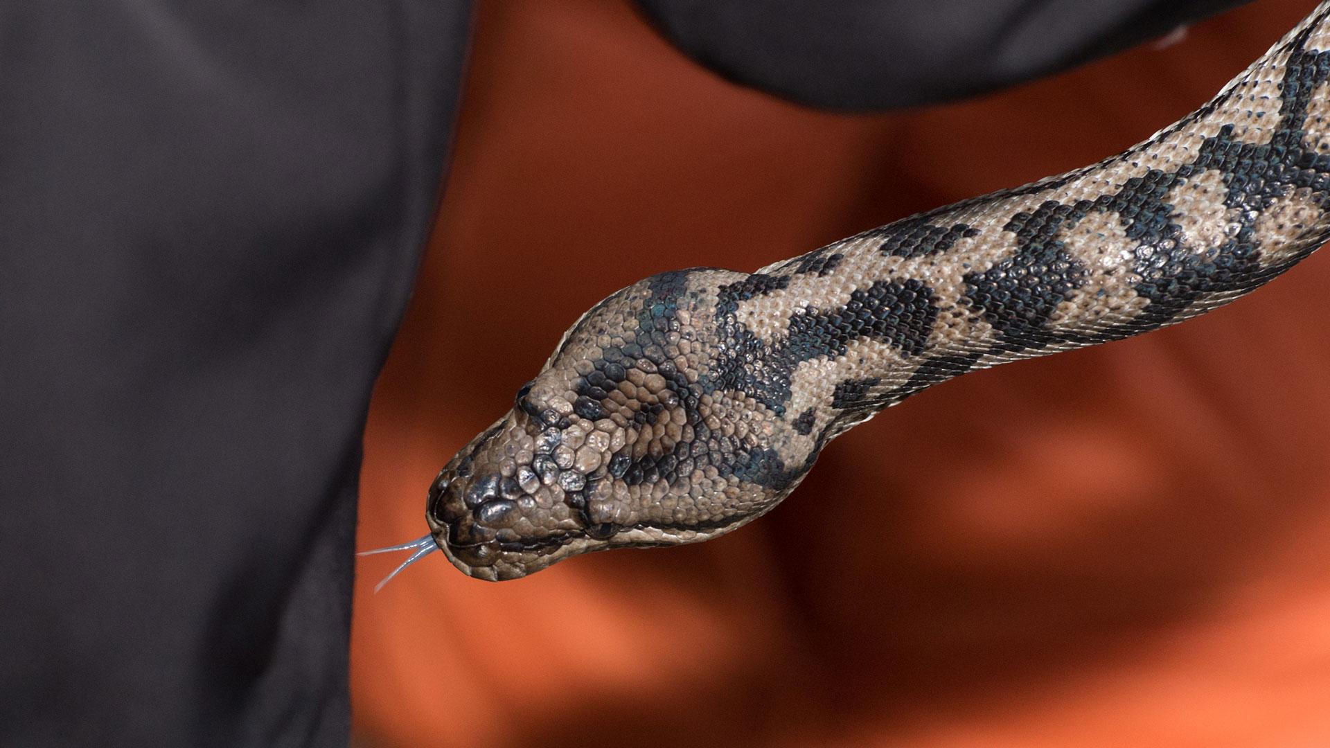 El misterio de 'el huevo de la serpiente' deja a los expertos luchando