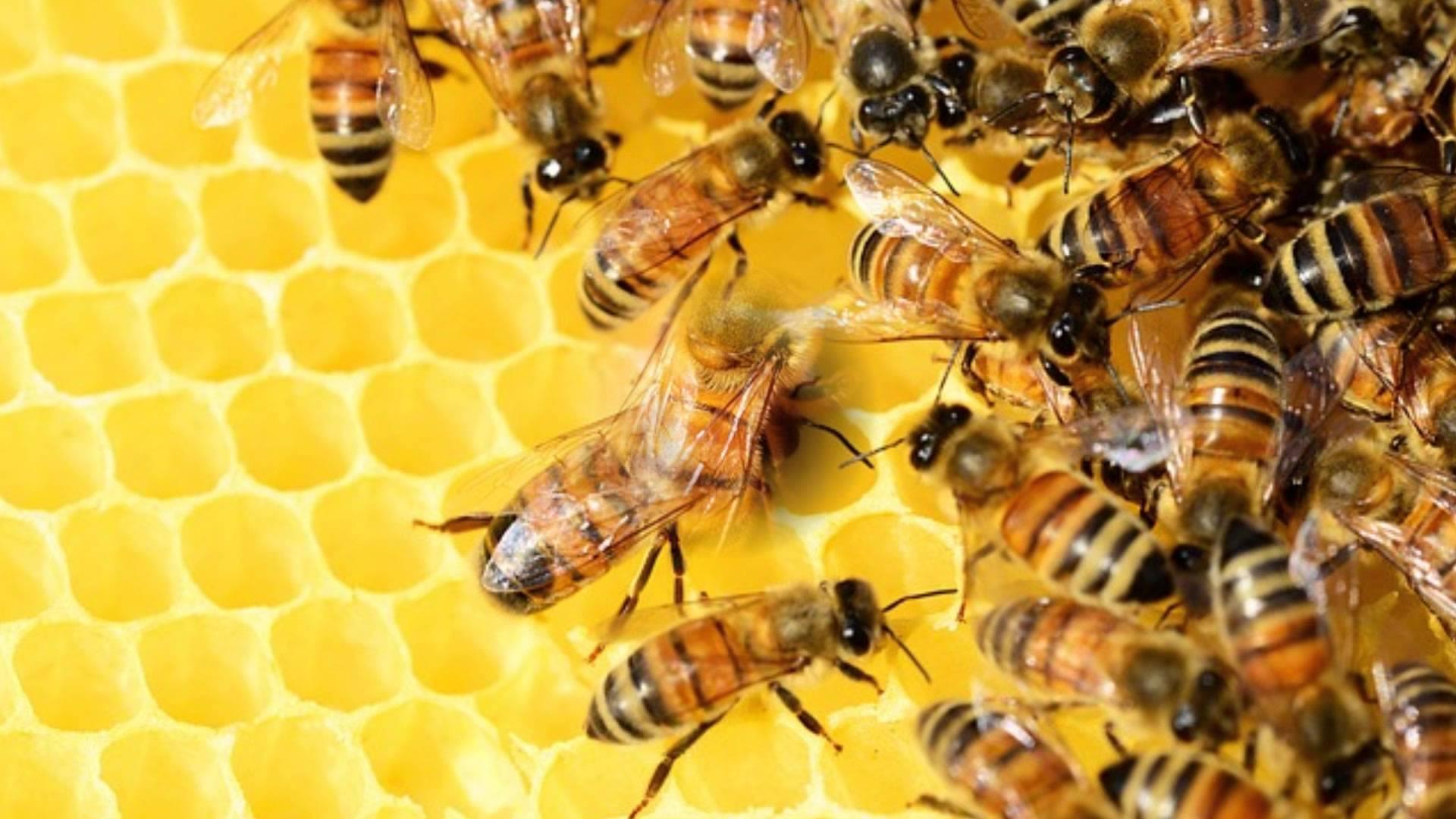 Nadie sabe por qué estas abejas construyeron un nido en espiral