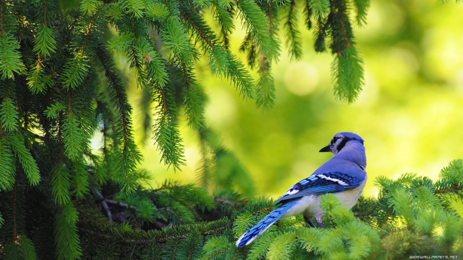 ¿Está aumentando la riqueza de especies?, un intenso debate ecológico