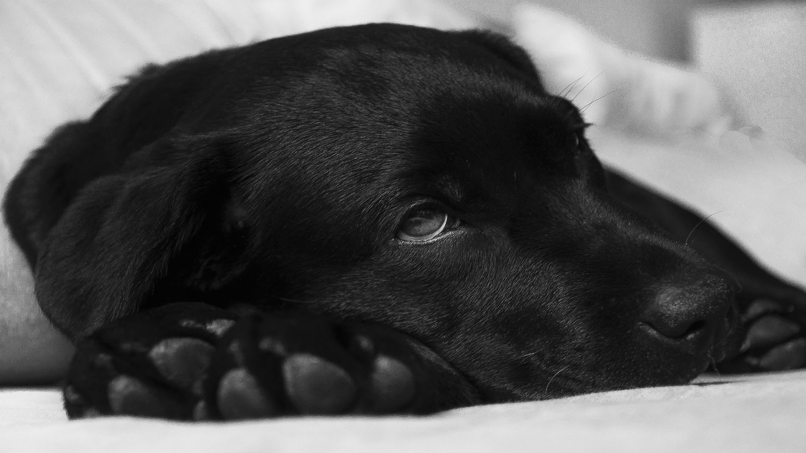 Did you know that dogs can get the flu just like humans?