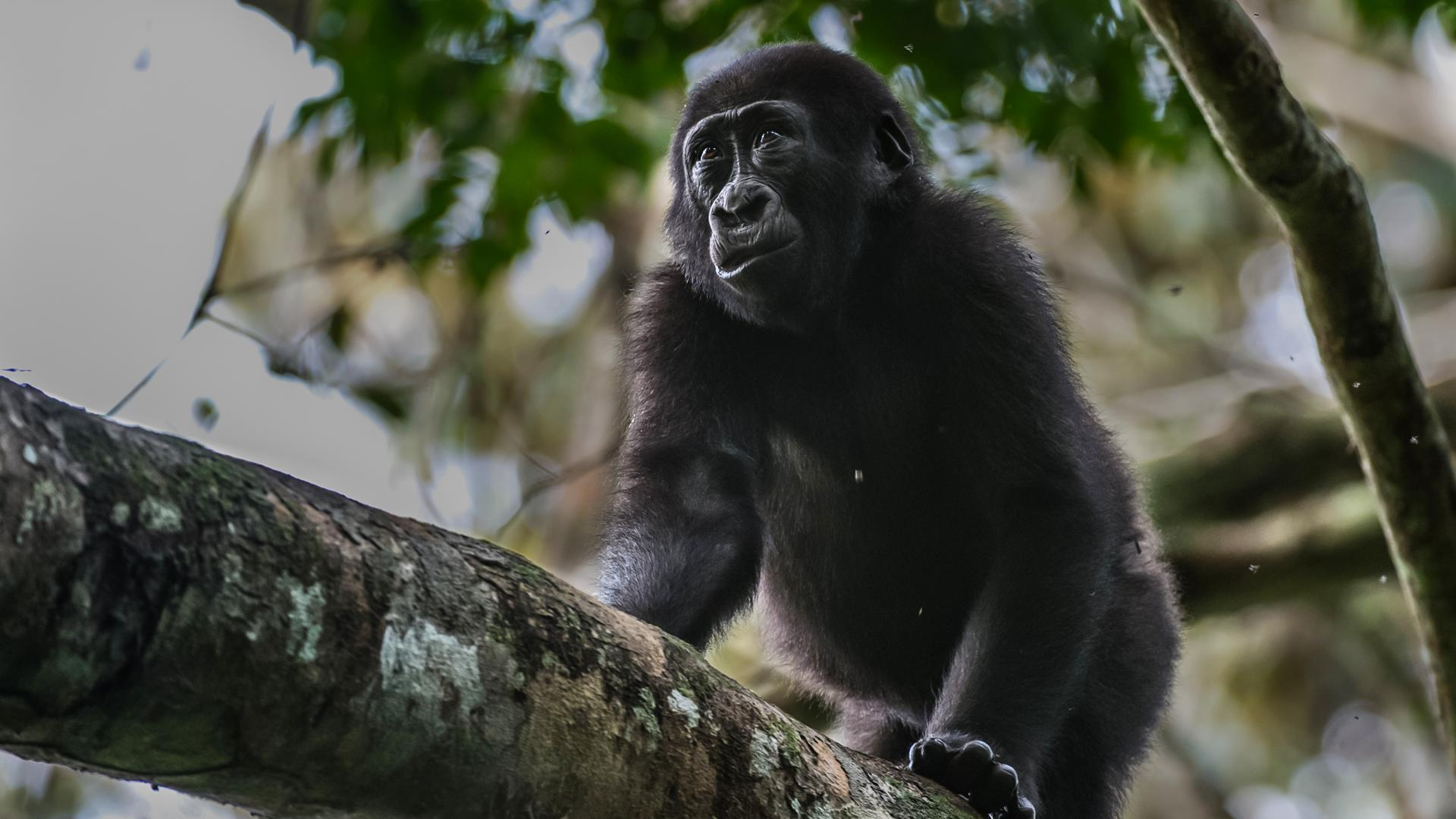 El Parque Nacional Pendjari de Benín vuelve a la vida