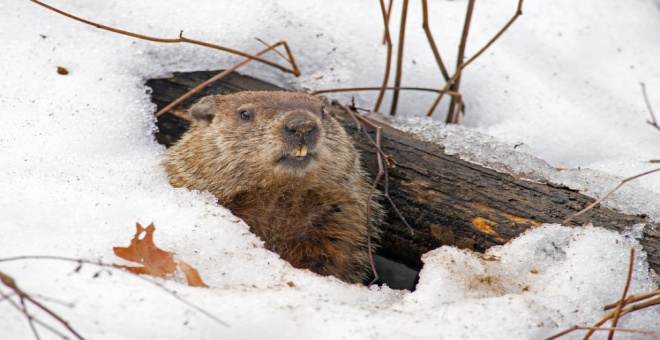 What do you know about 'Groundhog Day'