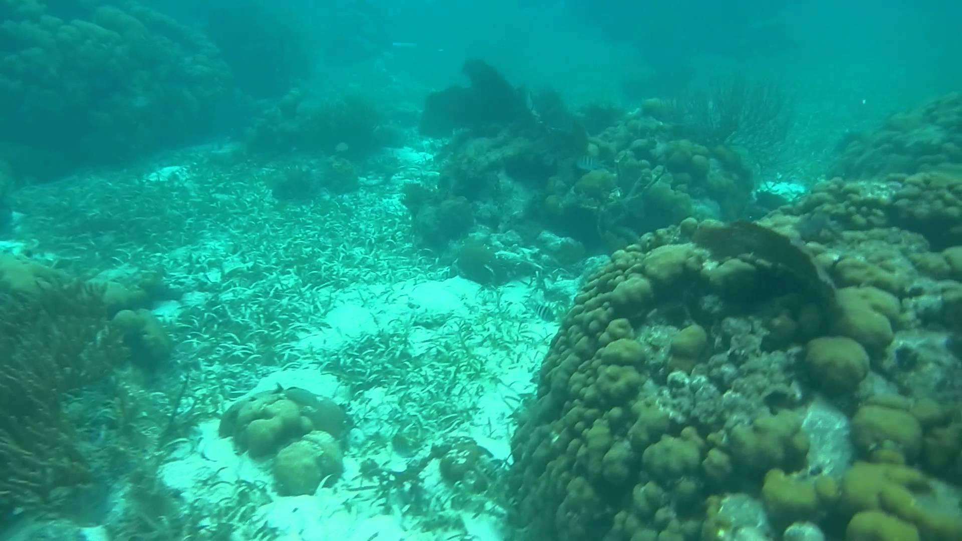 Los arrecifes de coral están en problemas: ¿Cómo pueden las personas adaptarse?