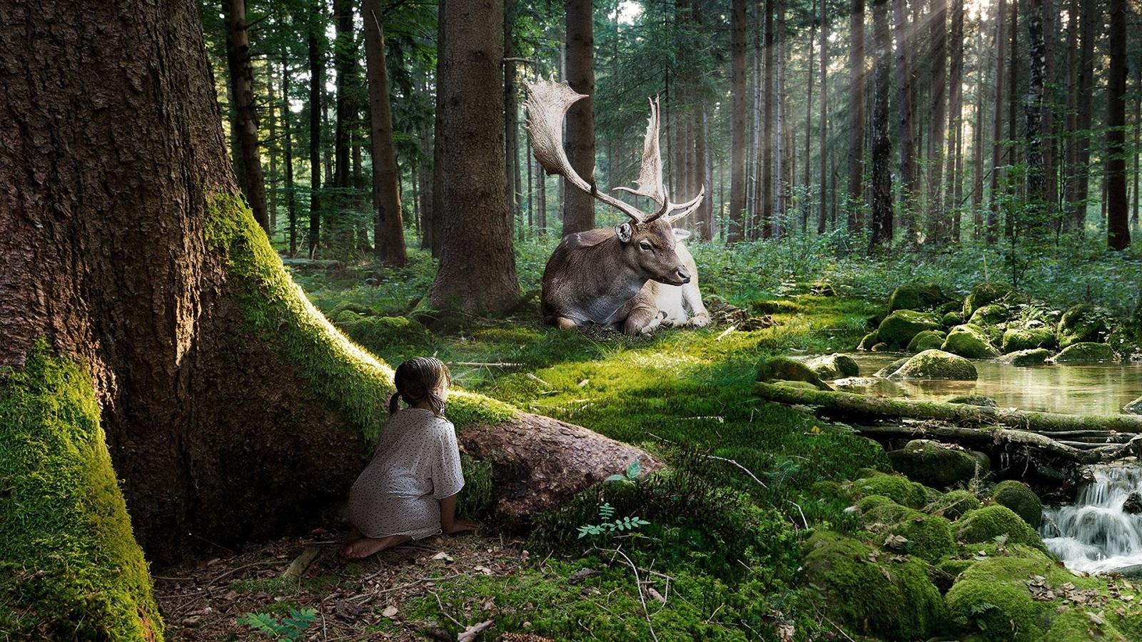 La importancia de los bosques en el planeta