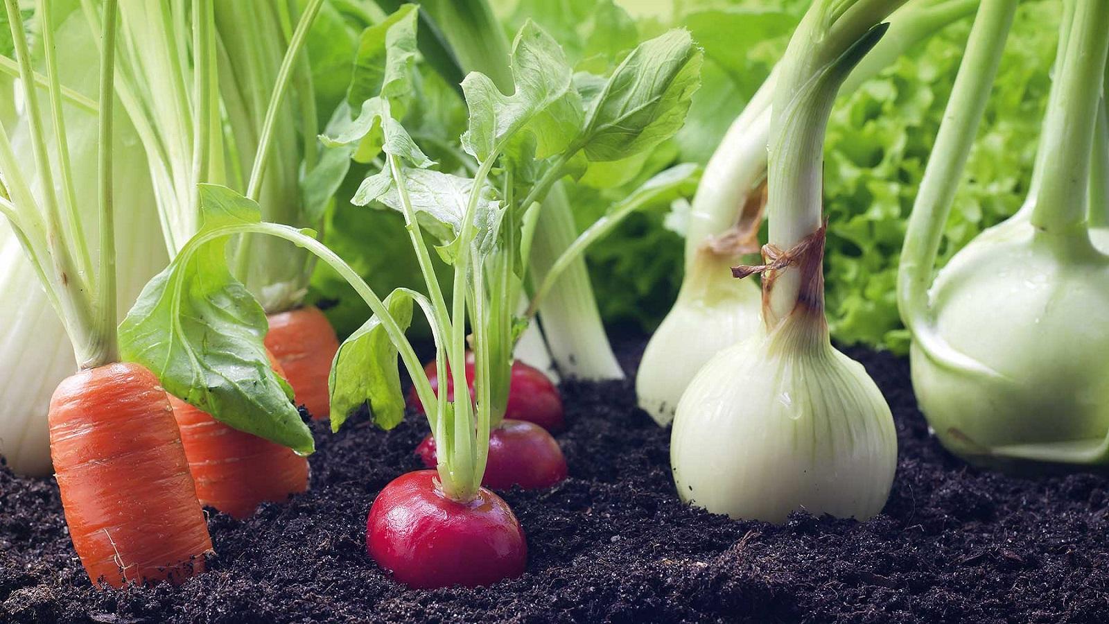 Alta tecnología apoya la agricultura ecológica