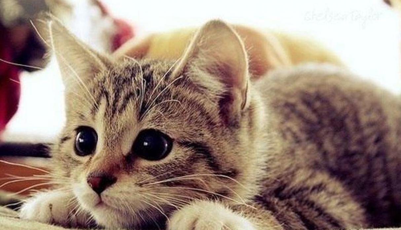 ¿Cuándo y dónde se convirtieron los gatos en nuestras mascotas?