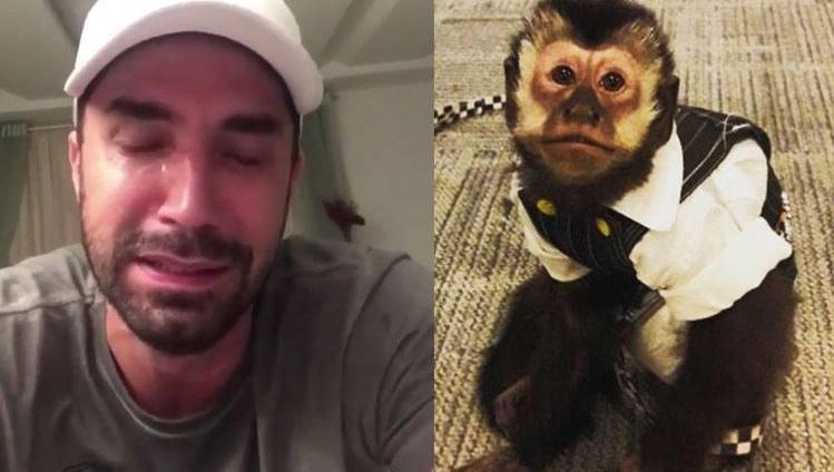 Twelves, o macaco do cantor Latino, morre após sofrer um atropelamento