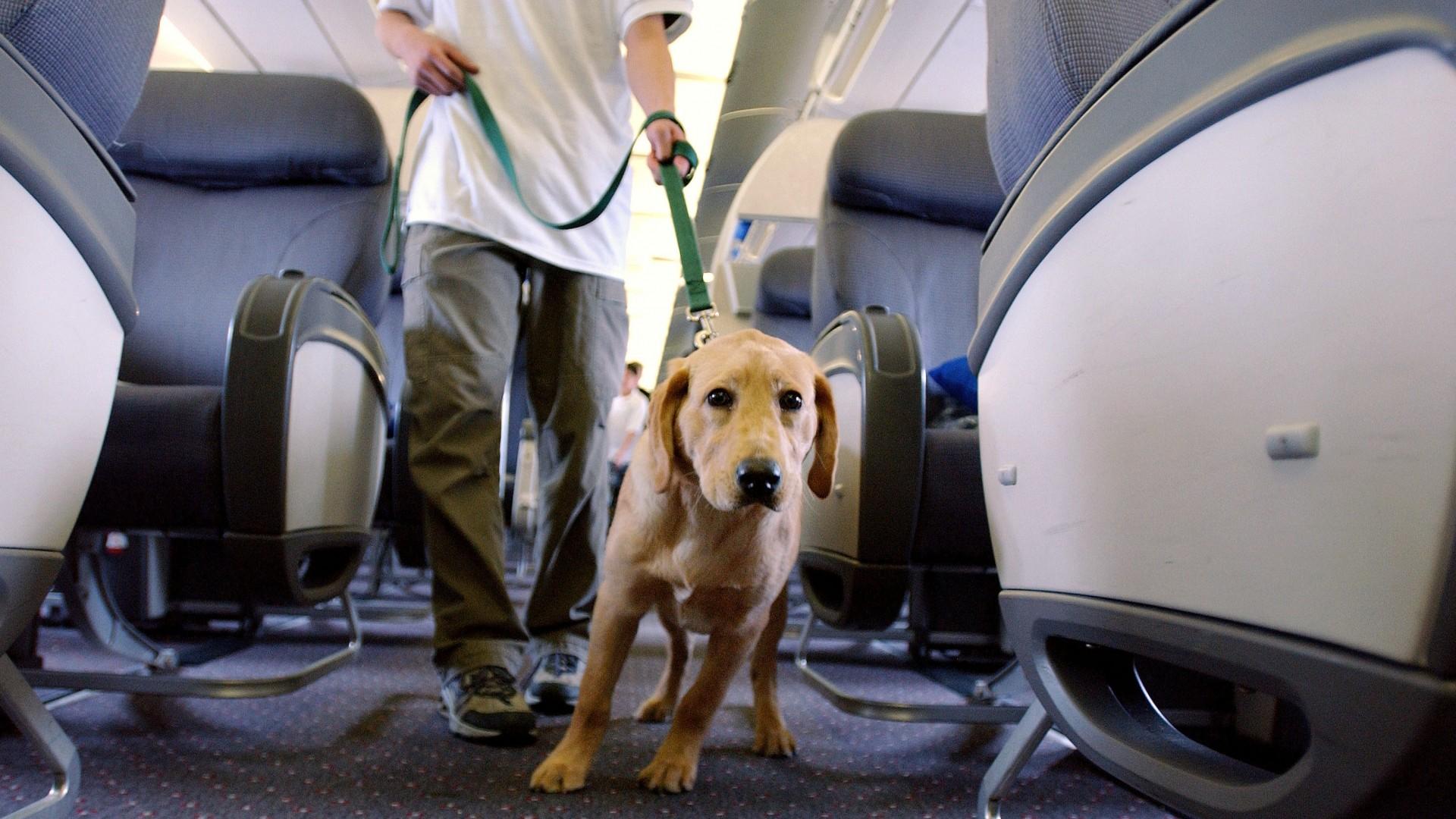 La muerte de un perro a bordo del vuelo de United