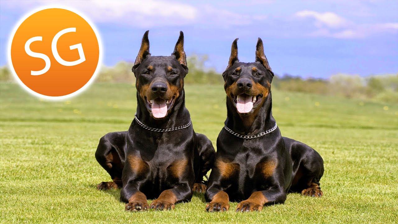 Las 6 mejores razas de perros que puedes tener como mascotas