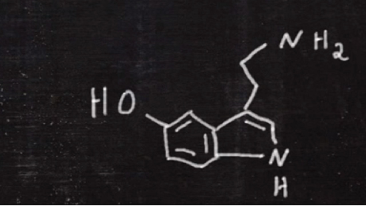 Serotonin: Chemical, neurotransmitter, hormone