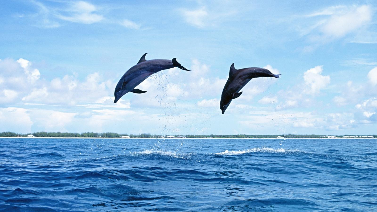¿Conoces los robots delfines? Aportar información a los científicos