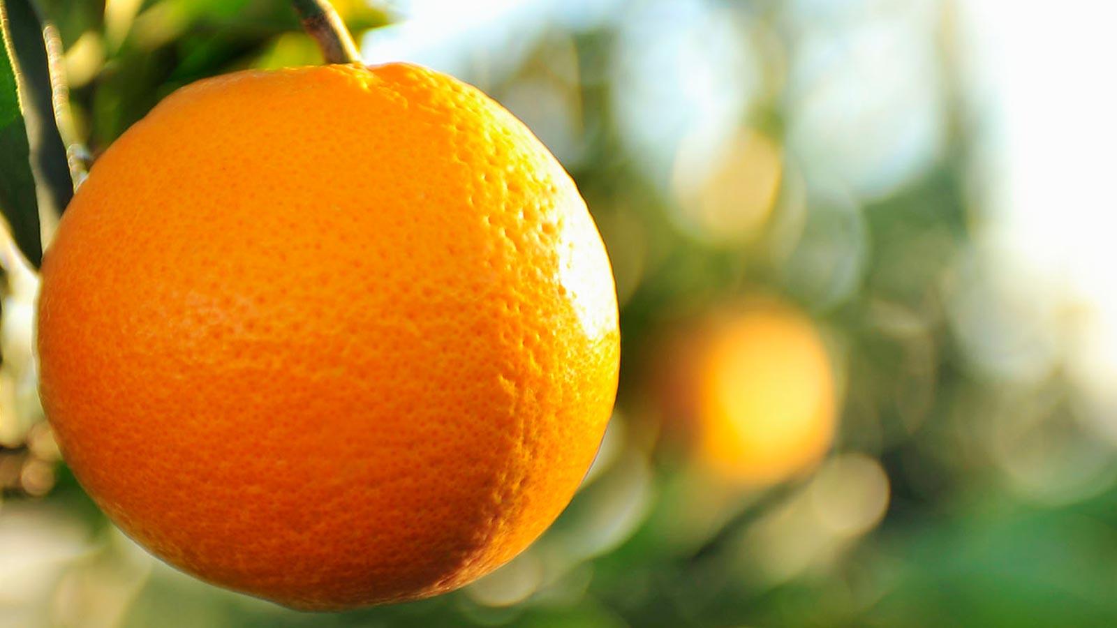 Video:La naranja sus nutrientes y beneficios para la salud