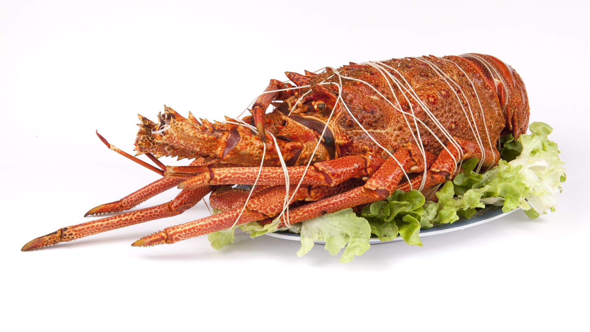 ¿Sabías que la langosta solía ser un alimento para los campesinos?