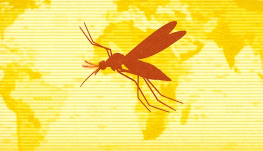Todo lo que debes saber sobre la fiebre amarilla