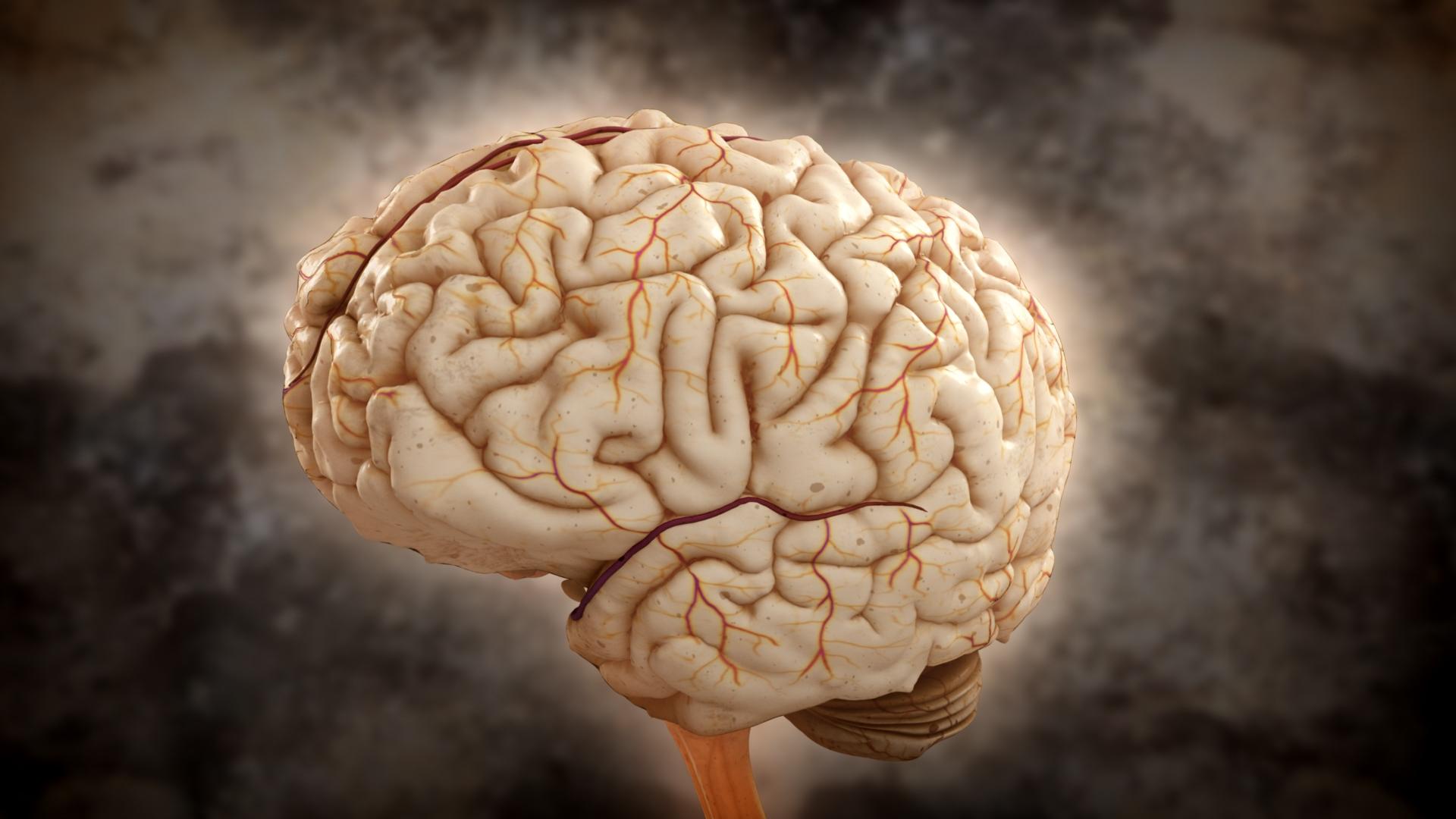 Los genes basura regeneran el cerebro