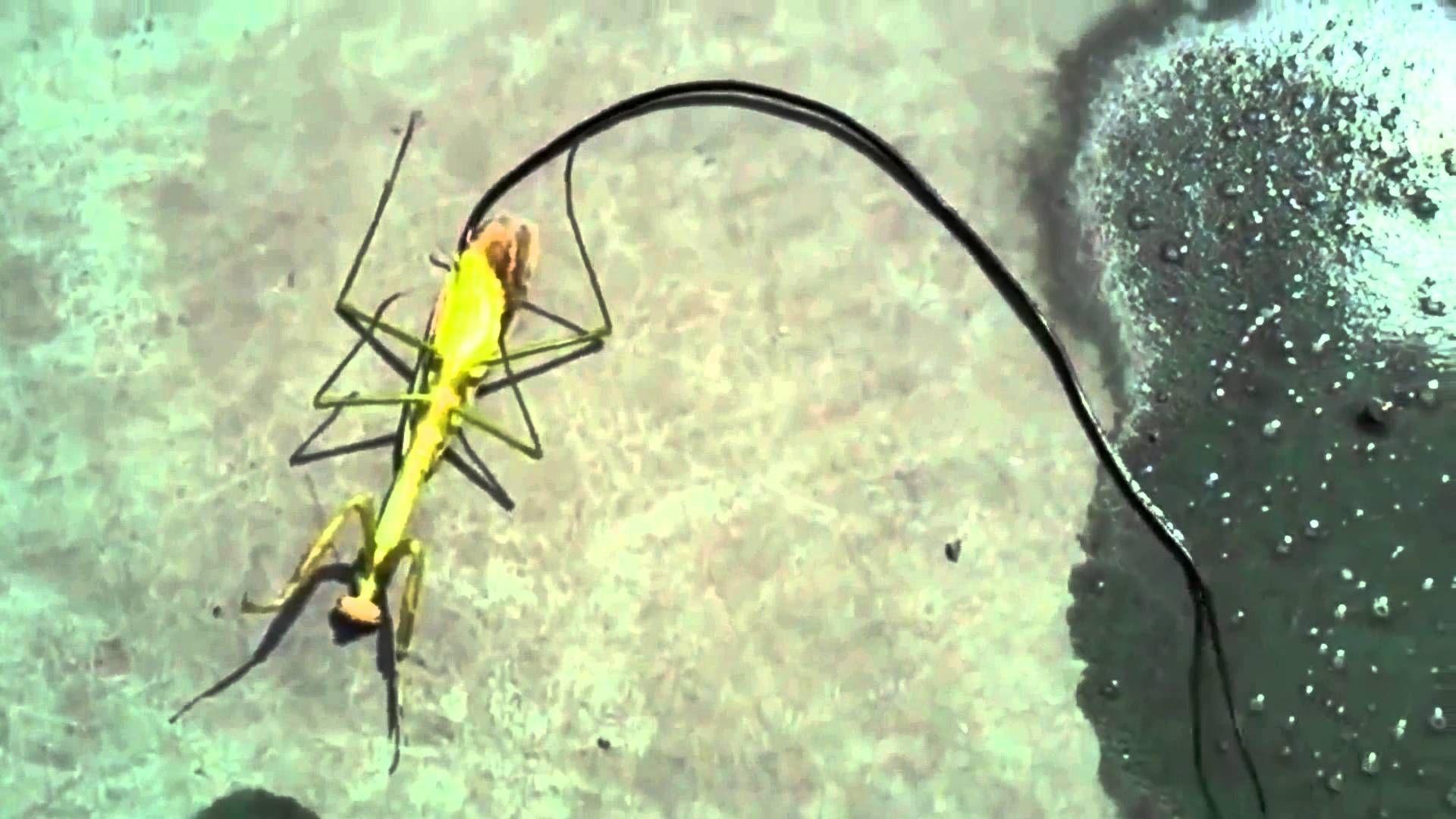 """Peligro de insectos """"alienígenas"""", aún nada hecho por la Salud"""