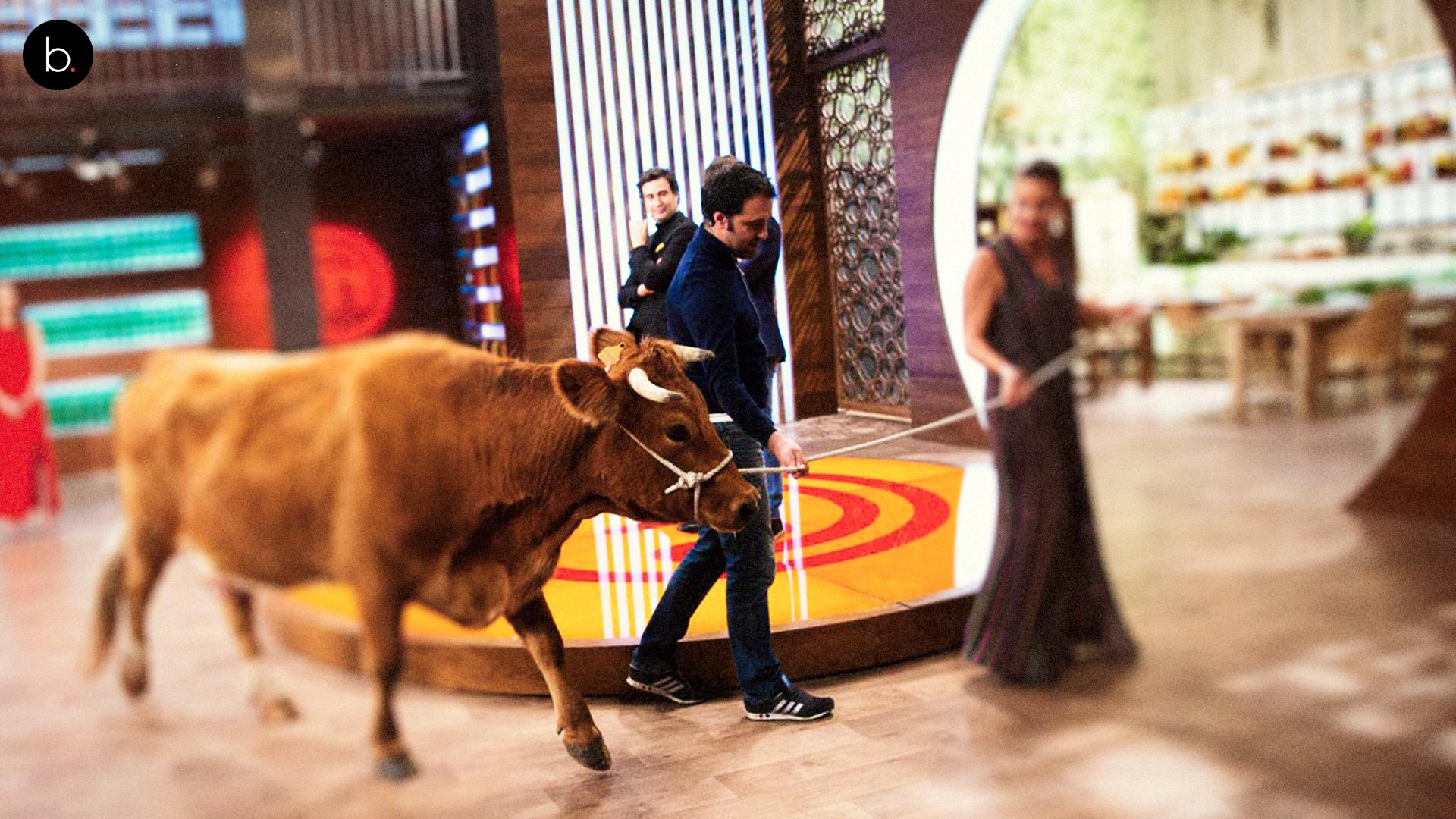 Polémica entre Twitter y MasterChef: una vaca siembra la ira en redes