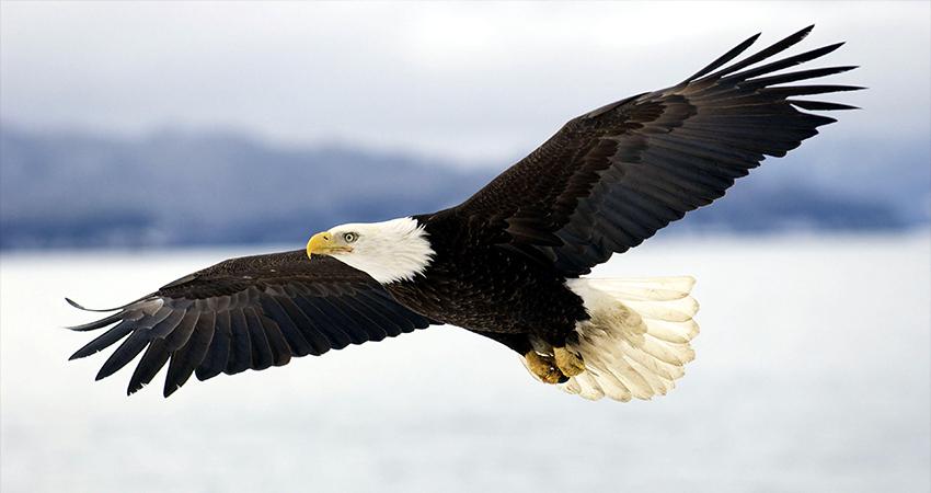Saiba mais sobre sua personalidade de acordo com o pássaro escolhido