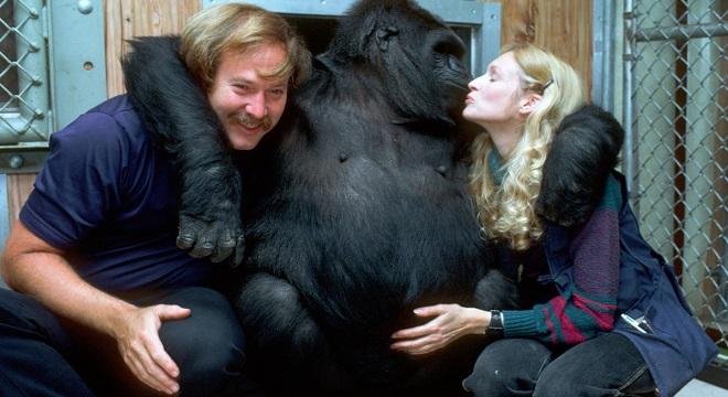 Koko fue un icono de la comunicación