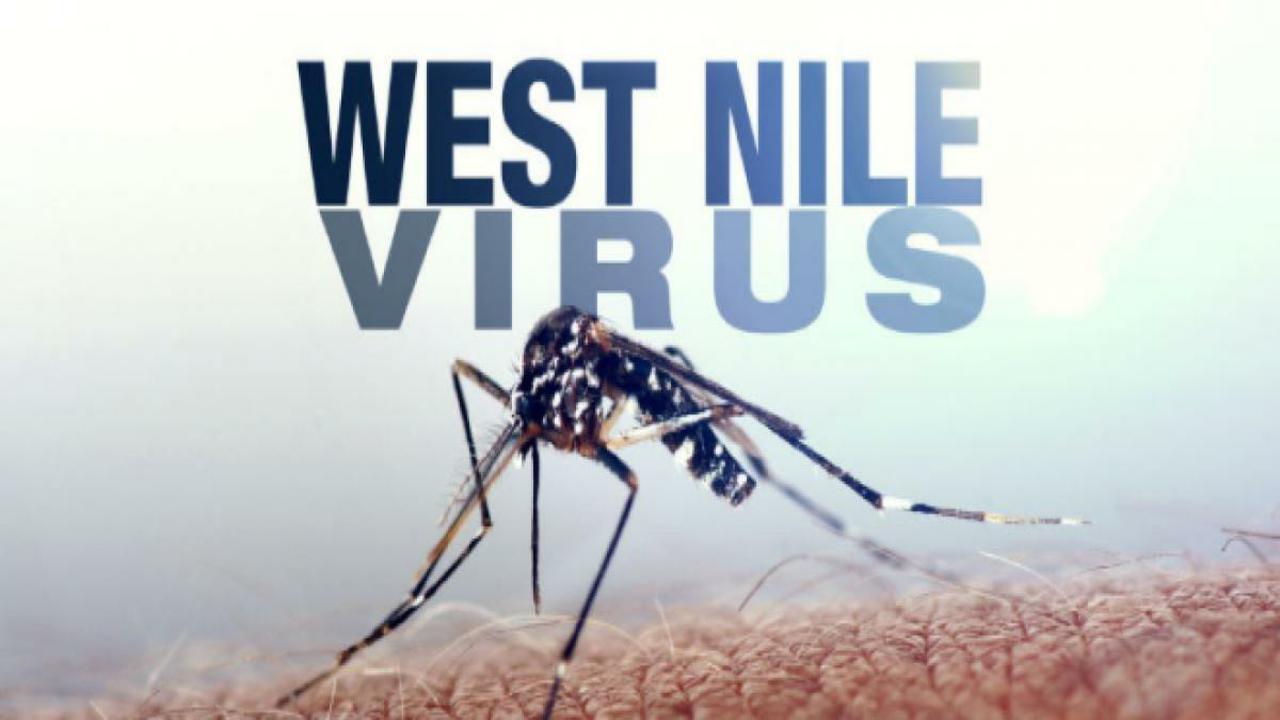 Rovigo: 58enne colpito dalla febbre del Nilo, ricoverato