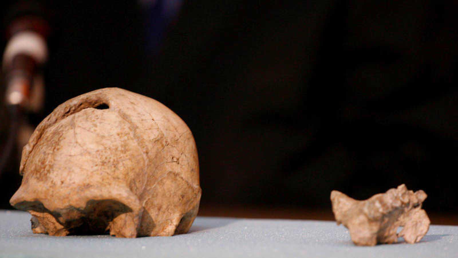 VÍDEO: Estudio revela la extinción del Homo erectus fue la pereza