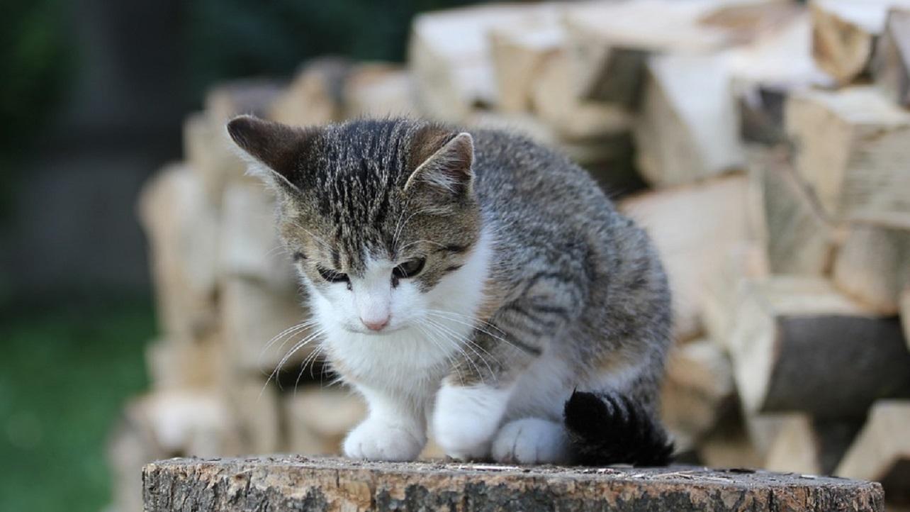 Napoli: assurdo episodio di violenza contro un gatto fermato dai presenti