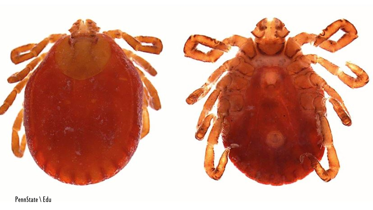 Alien Asian Ticks spread to eight states & are capable of carrying pathogens