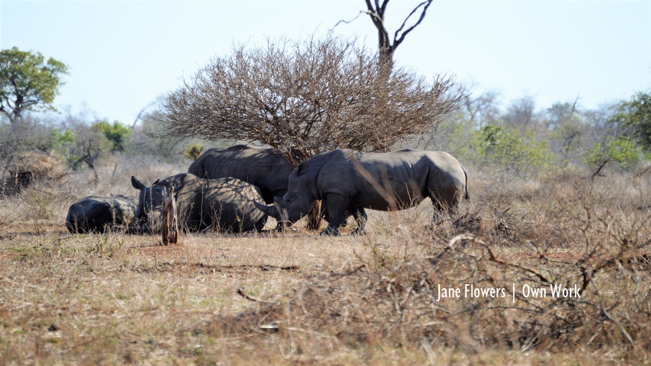Rhino poaching down by one-quarter in South Africa