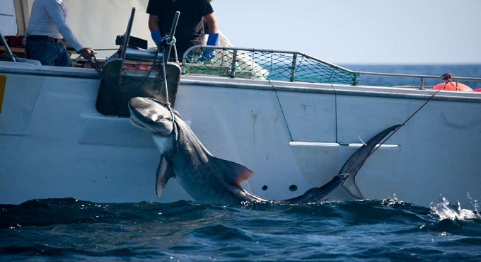 Sharks killed following two attacks in North Queensland's Whitsunday islands