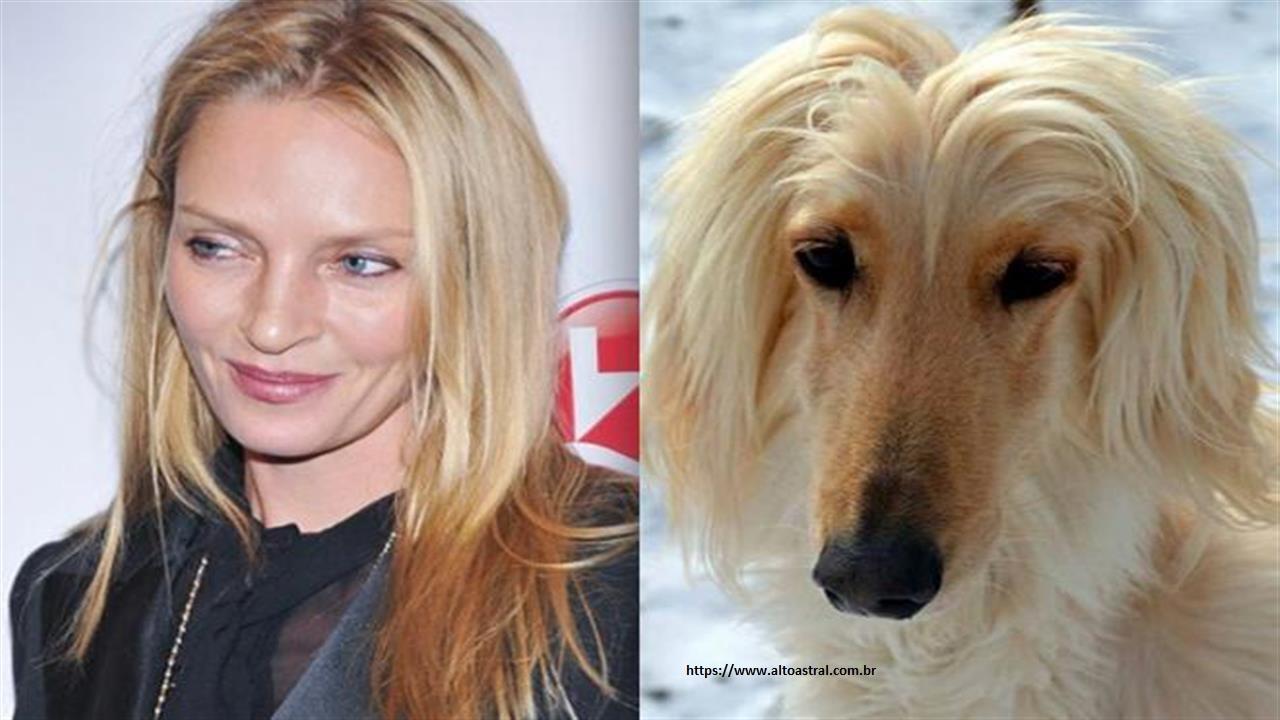 Cachorros que se parecem com famosos