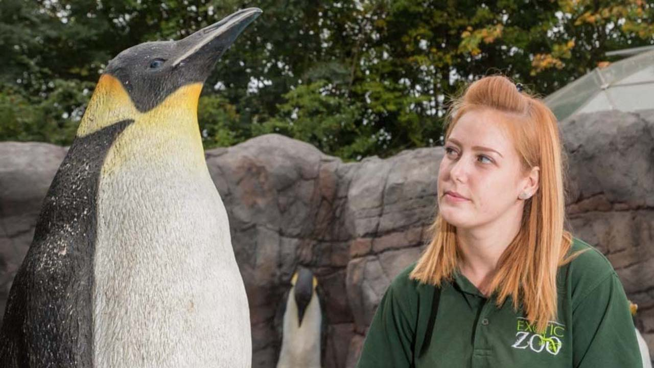 Telford Exotic Zoo fills new enclosure with plastic penguins