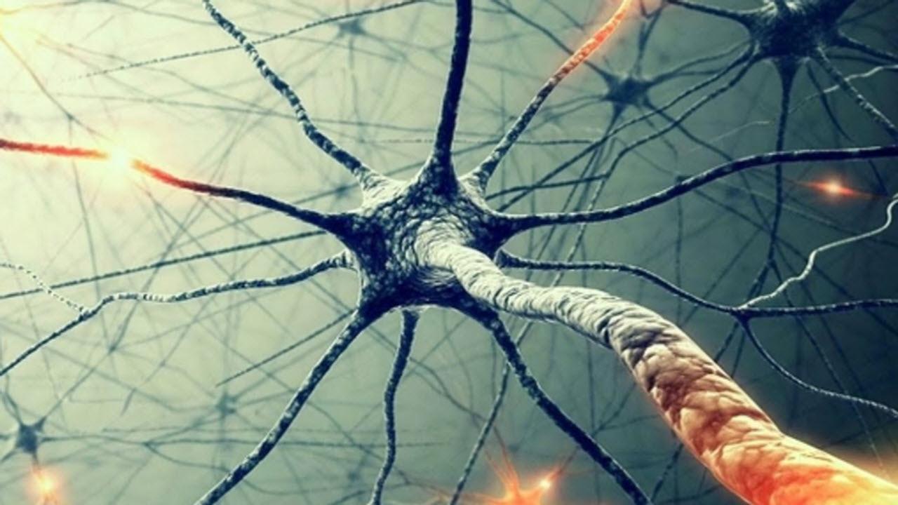 Il cervello umano dopo la morte resta attivo: l'ipotesi di Sam Parnia