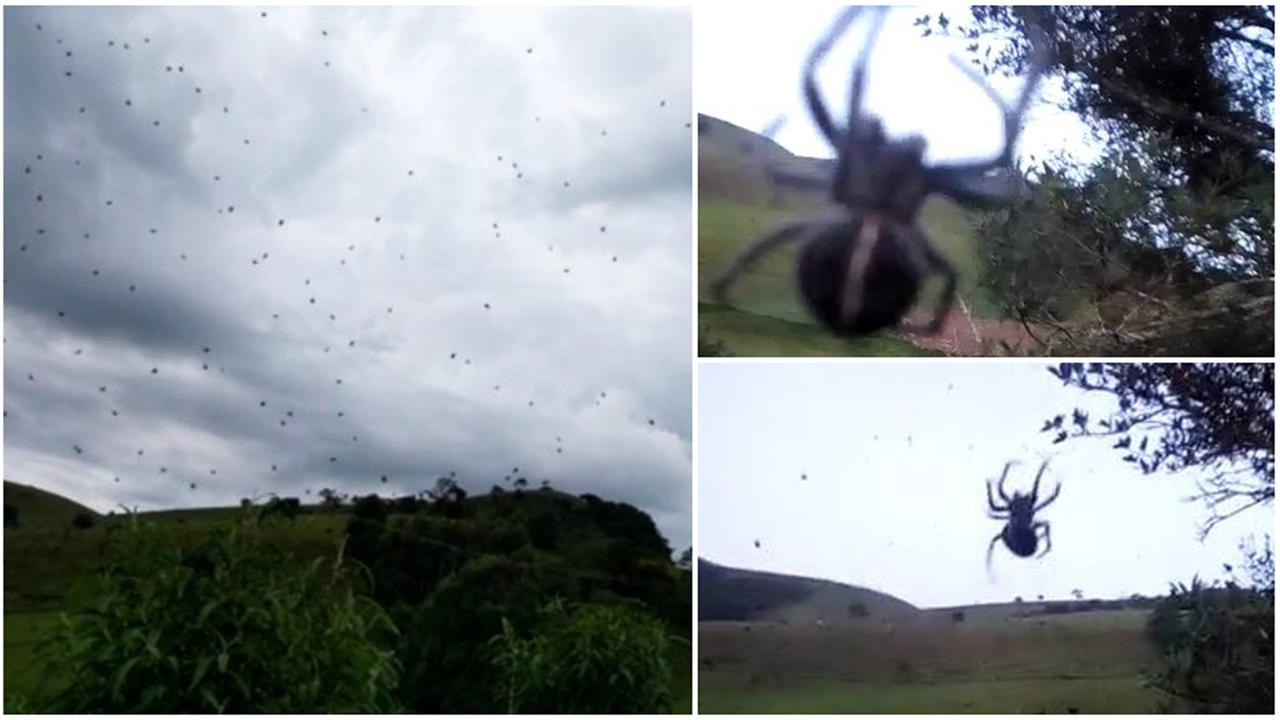 'Chuva de aranhas' assusta moradores no sul de Minas