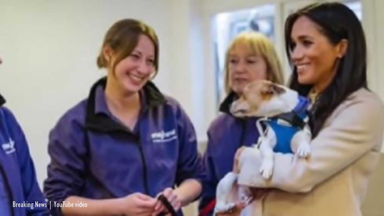 Meghan Markle takes over patronage of the Mayhew animal charity