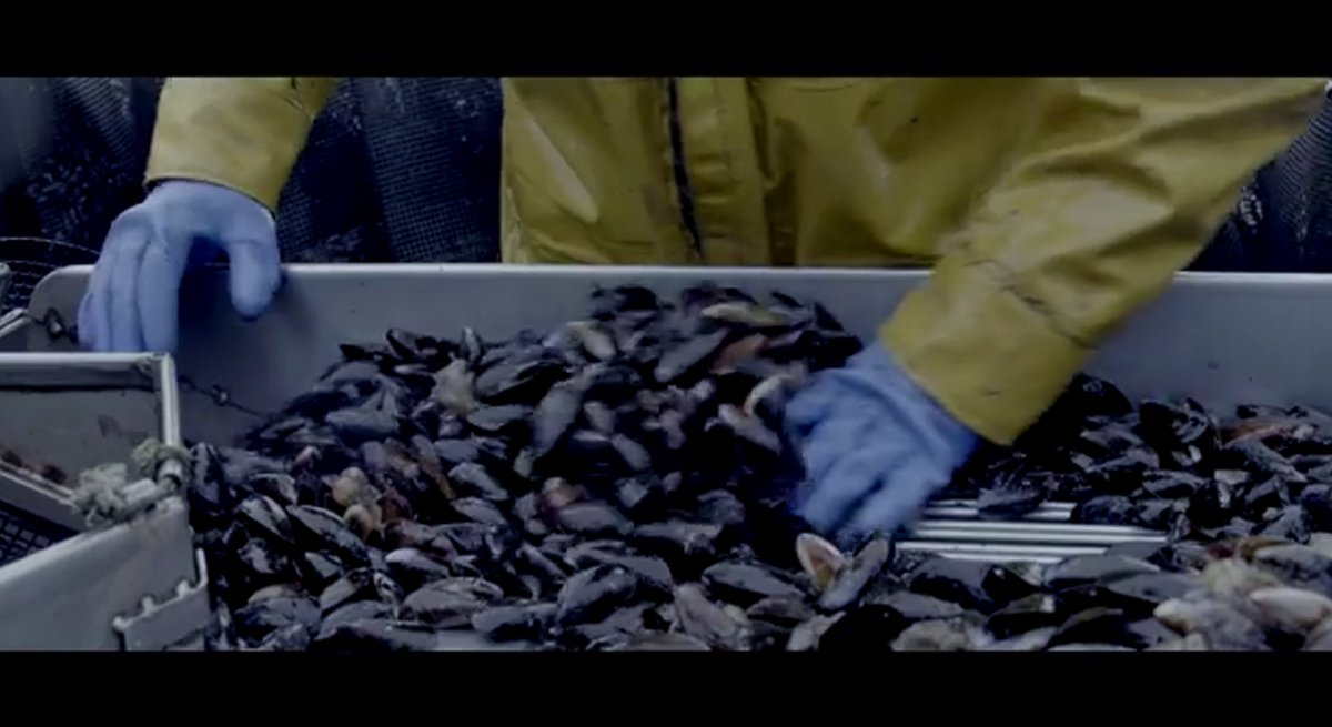 Little Lena Wilhare goes to town on bowl of mussels in viral video