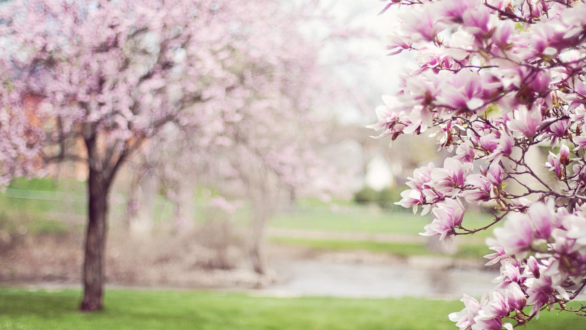 Oggi l'equinozio di primavera: l'evento che segna l'inizio della nuova stagione