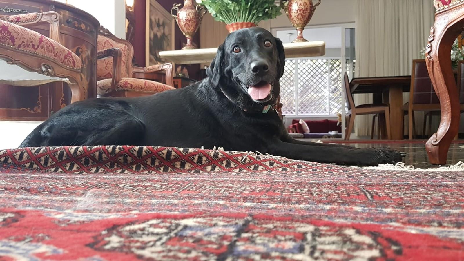 Família procura cadela Gaia, que foi levada após as fortes chuvas no Rio de Janeiro