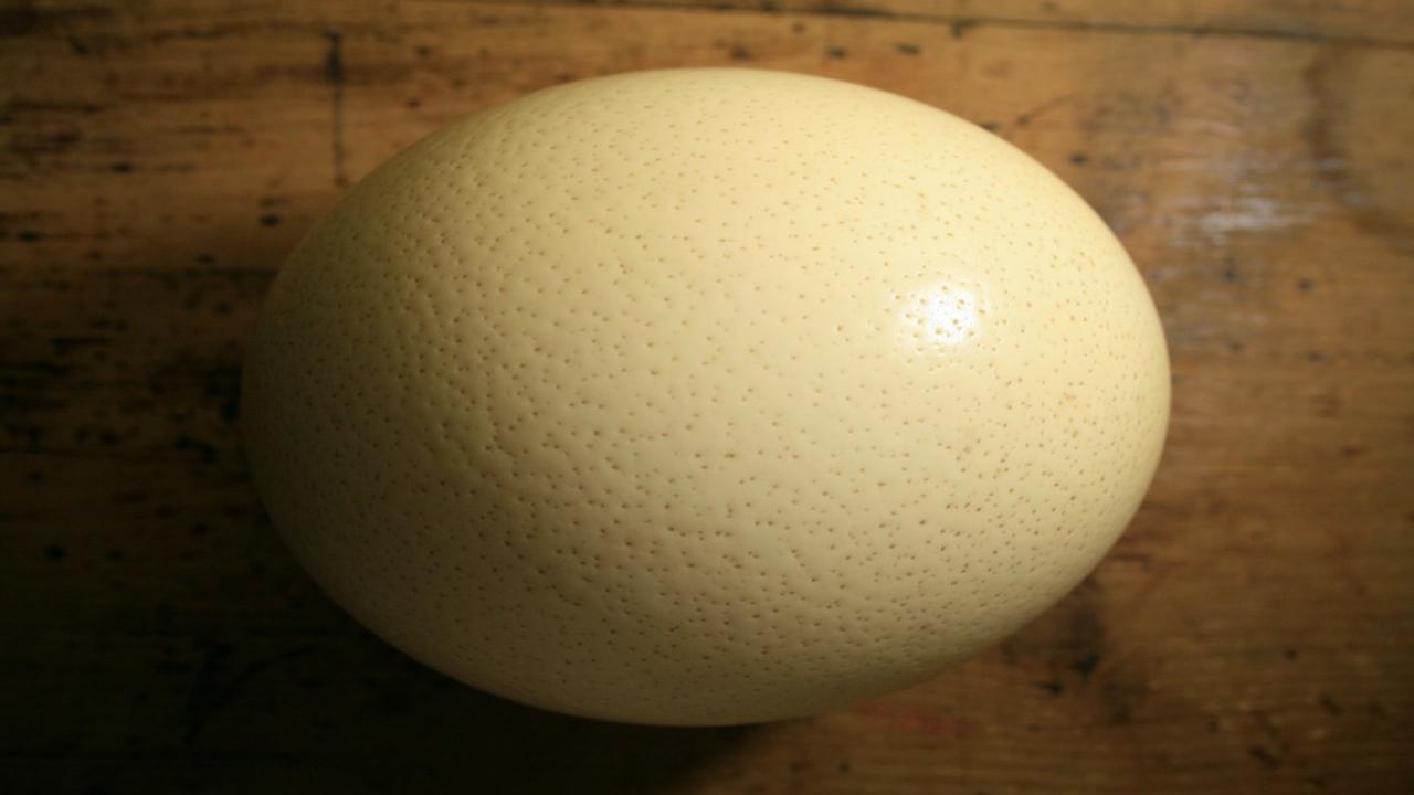 5 curiosità sull'uovo di struzzo, dalle dimensioni alle proprietà nutritive