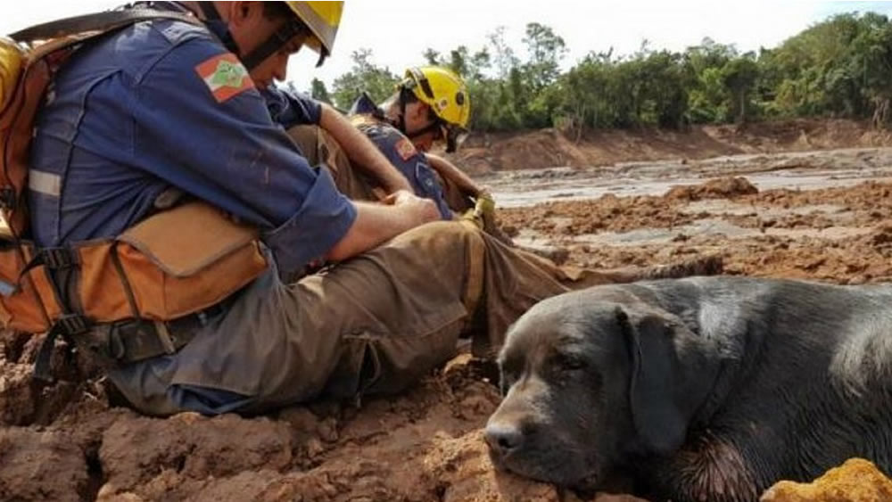Cão Barney, que ajudou a resgatar vítimas de Brumadinho, morre em Santa Catarina