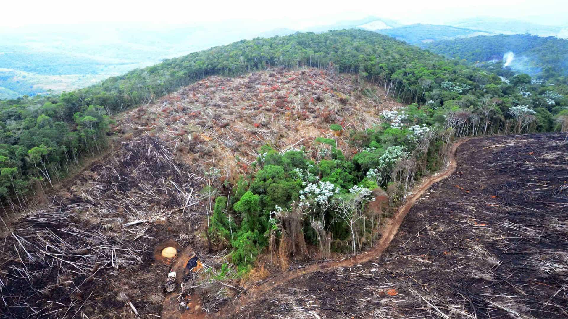 ONU aponta que um milhão de espécies de plantas e animais podem sumir da Terra