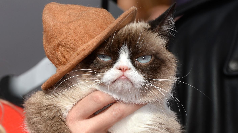 Usa, Grumpy Cat è morto: era il gatto 'arrabbiato' più famoso dei social