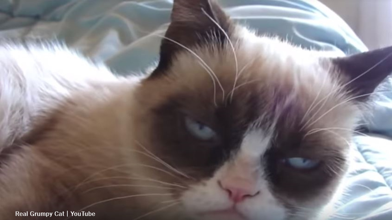 Grumpy Cat, with 8 million YouTube followers died aged 7-years-old