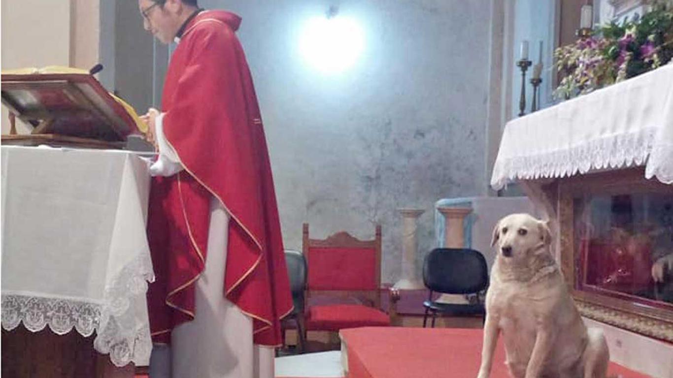Frosinone, parroco celebra la messa con l'aiuto del suo cane