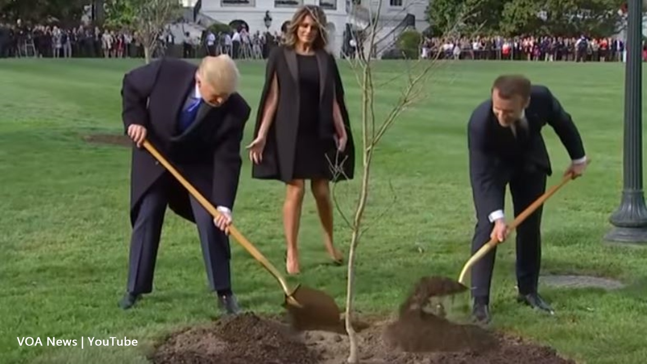 Macron's oak tree gifted to Donald Trump died